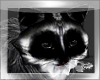 ~a~ Raccoon