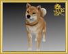 Pet Dog Bingo