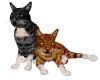 playful  furniture cats