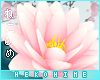 [HIME] Fei Hip Lotus L