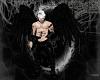 (SW)Ebony Reaver Wings