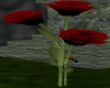 Red/black Rose
