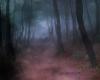 Misty Woods Screen