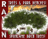 SPRING TREES & BENCHES