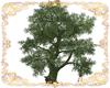 Sundosia Tree
