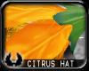 -cp Citrus Flower