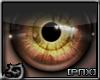 [PnX] Owl Eyes (F)