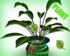 *FM* Lovely House Plant