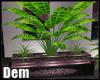 !D! Oriental Plant