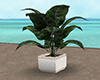 Beach Party Plant