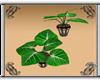 Rainy Day Phylly Plant