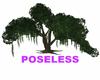 OLD TREE POSELESS