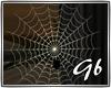 *Autumn*Spider Web