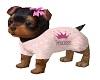Yorkie Puppy Animated