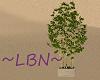 ~LBN~ Bamboo