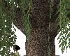 RW# Willow Tree