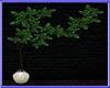 Deco.  Ivy plant Pot N/P