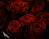 His Roses 2 Poster