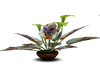 ~FM CUSTOM PLANT