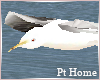 Animated Seagulls