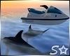S* CHIC Jetski & Dolphin