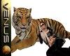 ~V~Bengal Tiger Ani