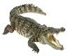 Crocodile Pet