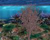 #18 coral reef tree