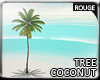 |2' Coconut tree III