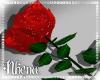 & Red Rose