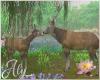Water Lilies Doe & Deer