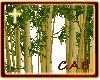 Golden Bamboo Trees