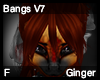 Ginger Bangs V7