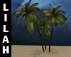 *L* Palm Trees
