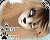 [Pets] Kimi | Naxos