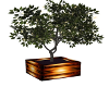 Potted Lit Tree-3