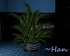 Cobalt Collection Plant
