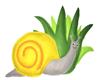 [IT] Snail