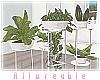 A* Exuma Plants