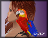 Pirates Shoulder Parrot