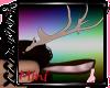 Fauna M/F Antlers