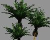 [SD] Love Nest Plant 1