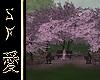 SF~ Sakura Garden Corner