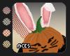 !A Bunny Pumpkin