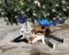 albero di natale  kiss