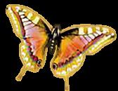 sticker_31741142_47156701