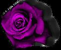 Etiqueta_14601470_19047208